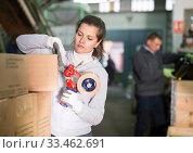 Купить «Female sealing carton boxes with sticky tape», фото № 33462691, снято 10 декабря 2019 г. (c) Яков Филимонов / Фотобанк Лори