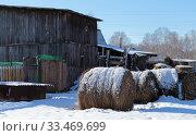 Купить «Рулны сена на корм животным. У ограды.», эксклюзивное фото № 33469699, снято 22 марта 2020 г. (c) Анатолий Матвейчук / Фотобанк Лори