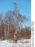 Купить «Столб электрический деревянный. В пригородном лесу.», эксклюзивное фото № 33469703, снято 22 марта 2020 г. (c) Анатолий Матвейчук / Фотобанк Лори
