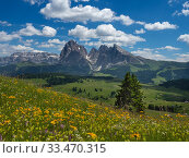 Alpine meadow landscape - Seiser Alm with mountains of Langkofel Group... Стоковое фото, фотограф Ernie  Janes / Nature Picture Library / Фотобанк Лори
