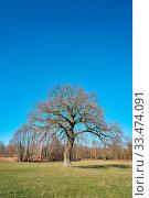 Купить «Eiche auf einer Wiese im Frühling», фото № 33474091, снято 13 июля 2020 г. (c) easy Fotostock / Фотобанк Лори