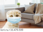 Купить «close up of scottish fold kitten in medical mask», фото № 33479599, снято 19 июля 2015 г. (c) Syda Productions / Фотобанк Лори