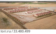 Купить «Aerial view of modern pig farm buildings in fields at summer day», видеоролик № 33480499, снято 20 июня 2019 г. (c) Яков Филимонов / Фотобанк Лори