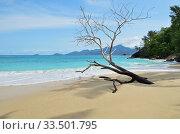Купить «Tropical beach», фото № 33501795, снято 8 июля 2011 г. (c) Знаменский Олег / Фотобанк Лори