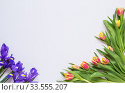 Tulips and irises on a white background, blank. Стоковое фото, фотограф Дмитрий Тищенко / Фотобанк Лори