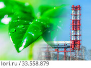 Купить «Зеленое растение на фоне производственного пейзажа . Концепция охраны природы и окружающей среды .», фото № 33558879, снято 3 августа 2020 г. (c) Сергеев Валерий / Фотобанк Лори
