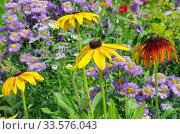 Купить «Цветы рудбекии (лат. Rudbeckiа) на клумбе в летнем саду», фото № 33576043, снято 15 июля 2019 г. (c) Елена Коромыслова / Фотобанк Лори