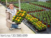Young female gardener holding crate with gerbera in pots. Стоковое фото, фотограф Яков Филимонов / Фотобанк Лори