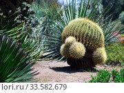 Купить «Cactus in the los angeles botanical garden», фото № 33582679, снято 11 мая 2012 г. (c) Арестов Андрей Павлович / Фотобанк Лори