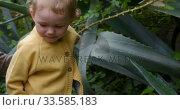 Купить «Caucasian baby picking flowers in garden », видеоролик № 33585183, снято 12 апреля 2019 г. (c) Wavebreak Media / Фотобанк Лори