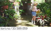Купить «Little girl gardening and watering plant in a botanical garden», видеоролик № 33589059, снято 23 января 2020 г. (c) Wavebreak Media / Фотобанк Лори