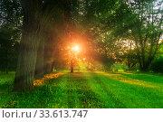 Купить «Летний пейзаж, летний парк на закате. Summer landscape - colorful summer city park with deciduous green trees in sunny evening. Summer park trees», фото № 33613747, снято 4 сентября 2019 г. (c) Зезелина Марина / Фотобанк Лори