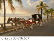 Купить «Horse carriage taxi, Punta Gorda, Cienfuegos, Cuba.», фото № 33616667, снято 17 марта 2020 г. (c) age Fotostock / Фотобанк Лори