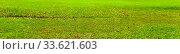 Купить «Green lawn with fallen leaves close-up.», фото № 33621603, снято 3 октября 2019 г. (c) Елена Блохина / Фотобанк Лори