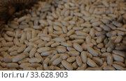 Купить «Closeup of dried ganxet beans in wicker baskets for sale on market», видеоролик № 33628903, снято 14 ноября 2019 г. (c) Яков Филимонов / Фотобанк Лори