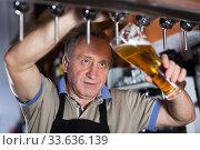 Купить «Barman is pouring beer with foam for client», фото № 33636139, снято 18 сентября 2017 г. (c) Яков Филимонов / Фотобанк Лори