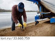 Polish harvesters harvesting asparagus, Herten, Ruhr area, North Rhine-Westphalia, Germany. Редакционное фото, агентство Caro Photoagency / Фотобанк Лори