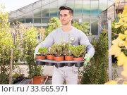 Купить «Young gardener caring for flowers in orangery», фото № 33665971, снято 8 ноября 2019 г. (c) Яков Филимонов / Фотобанк Лори
