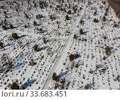 Большое кладбище. Геометрия могил. Захоронения (2020 год). Стоковое фото, фотограф Яковлев Сергей / Фотобанк Лори