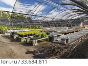 Купить «Mixed plants and shrubs being organically grown in black plastic containers in a greenhouse, Montreal Botanical Garden, Quebec, Canada.», фото № 33684811, снято 14 октября 2018 г. (c) age Fotostock / Фотобанк Лори