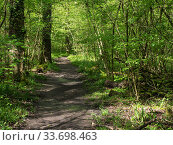 Купить «Footpath through Swell Wood RSPB Reserve, Swell, Somerset, England, UK, April 2019», фото № 33698463, снято 29 мая 2020 г. (c) Nature Picture Library / Фотобанк Лори
