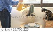 Купить « Caucasian woman watering her plants at home», видеоролик № 33700223, снято 9 апреля 2020 г. (c) Wavebreak Media / Фотобанк Лори