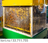 Улей с прозрачными стенками для наблюдения за пчелами. Стоковое фото, фотограф Вячеслав Палес / Фотобанк Лори