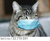 Портрет серого полосатого кота в защитной маске. Стоковое фото, фотограф Ольга Анофриева / Фотобанк Лори