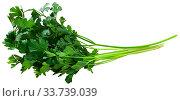 Green parsley isolated over white background. Стоковое фото, фотограф Яков Филимонов / Фотобанк Лори