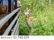 Купить «Самец европейской лани общается с детьми в зоопарке», фото № 33749039, снято 8 сентября 2019 г. (c) Evgenia Shevardina / Фотобанк Лори