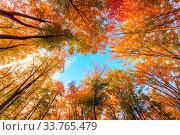 Купить «Autumn beech fall forest in Bukk-Hungary», фото № 33765479, снято 13 июля 2020 г. (c) easy Fotostock / Фотобанк Лори