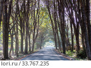 Купить «Green trees tunnel. Natural background.», фото № 33767235, снято 31 мая 2020 г. (c) easy Fotostock / Фотобанк Лори