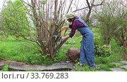 Купить «Woman gardener prunes with a pruner dry branches on a shrub in her spring garden», видеоролик № 33769283, снято 15 мая 2020 г. (c) Алексей Кузнецов / Фотобанк Лори