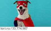 Купить «Funny dog in superhero costume», видеоролик № 33774987, снято 12 мая 2020 г. (c) Ekaterina Demidova / Фотобанк Лори