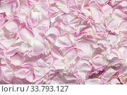 Купить «Floral background covering delicate pink rose petals», фото № 33793127, снято 10 мая 2020 г. (c) ok_fotoday / Фотобанк Лори