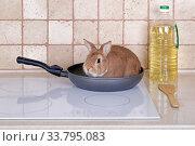 Живой кролик сидит в сковороде на кухонной плите. Стоковое фото, фотограф Игорь Долгов / Фотобанк Лори