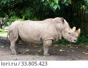 Rhino in the park on a background of trees. Стоковое фото, фотограф Куликов Константин / Фотобанк Лори
