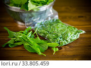 fresh green sorrel in a vacuum bag, in a colander. Стоковое фото, фотограф Peredniankina / Фотобанк Лори