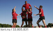 Купить «Rugby players celebrating on the field», видеоролик № 33805831, снято 13 ноября 2019 г. (c) Wavebreak Media / Фотобанк Лори