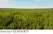Купить «A huge thicket of coniferous green forest», видеоролик № 33819471, снято 2 июня 2020 г. (c) Константин Шишкин / Фотобанк Лори