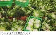 Купить «Plastic boxes with lettuce on the field», видеоролик № 33827367, снято 23 мая 2020 г. (c) Яков Филимонов / Фотобанк Лори