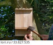 Купить «Bat box with ridged wooden back panel for bats to cling to, nailed to a tree trunk in a garden, Wiltshire, UK, April.», фото № 33827535, снято 29 мая 2020 г. (c) Nature Picture Library / Фотобанк Лори