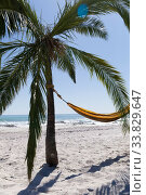 Magnificent view of a beach with a palm tree and a hammock tied to it. Стоковое фото, агентство Wavebreak Media / Фотобанк Лори