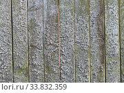 Купить «An old plank wooden unpainted gray fence covered with lichens», фото № 33832359, снято 6 мая 2020 г. (c) Максим Мицун / Фотобанк Лори