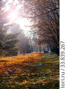 Купить «Fallen leaves on the ground.», фото № 33839267, снято 19 ноября 2019 г. (c) Елена Блохина / Фотобанк Лори