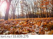 Купить «Fallen leaves on the ground.», фото № 33839275, снято 19 ноября 2019 г. (c) Елена Блохина / Фотобанк Лори