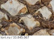 Nahaufnahme der Rinde einer Palme - grober Hintergrund. Стоковое фото, фотограф Zoonar.com/Alfred Hofer / easy Fotostock / Фотобанк Лори