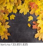 Купить «Frame of fallen maple leaves on a graphite gray background», фото № 33851835, снято 9 октября 2018 г. (c) Сергей Молодиков / Фотобанк Лори