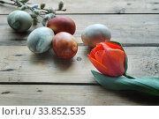 Купить «Organic painted easter eggs and red tulip», фото № 33852535, снято 19 апреля 2020 г. (c) Короленко Елена / Фотобанк Лори