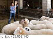 Купить «Farm worker caring for sheep», фото № 33858143, снято 4 августа 2020 г. (c) Яков Филимонов / Фотобанк Лори